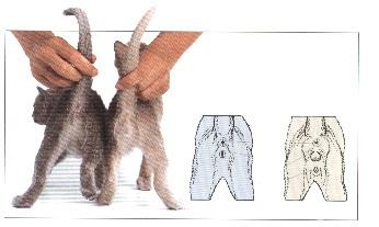 kitten-sex.jpg